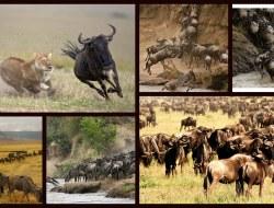 Mbeya to Serengeti National Park