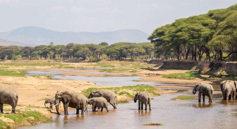Top 5 National Parks near Mbeya