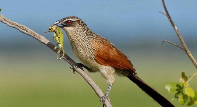 Bird watching in Mbeya